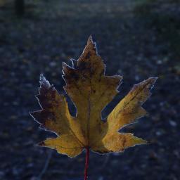 nature leaf outandabout freetoedit