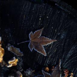 leaf frozen frosty outandabout freetoedit