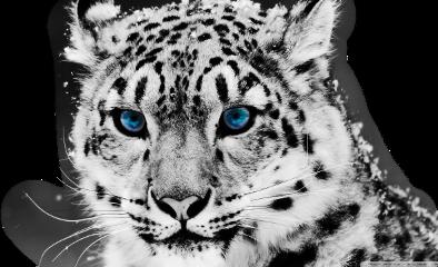 freetoedit remix sccheetah cheetah