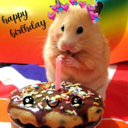 happybirthday birthday birthdayboy hamster cute freetoedit