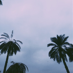 palmtrees sky clouds photography phonephotography