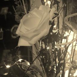 sepia rose flower lights