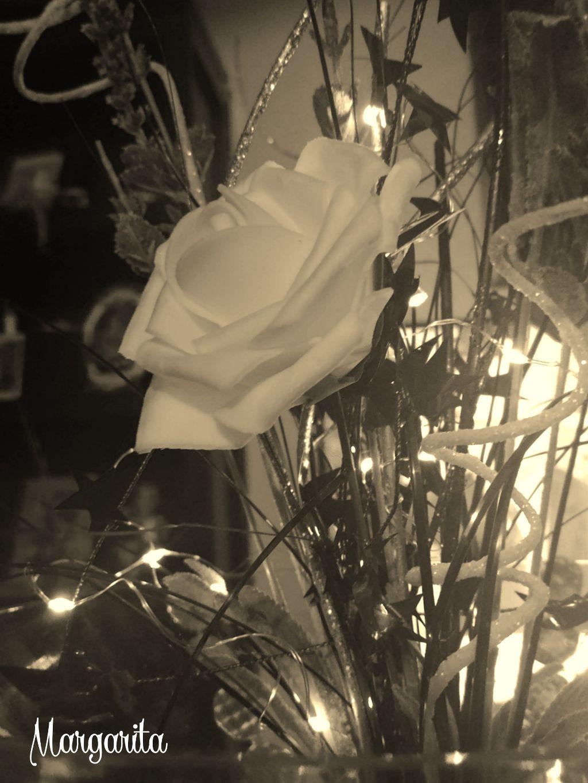 Happy Wednesday! Feliz miércoles! 🌞 Una gran actitud se convierte en un gran día que se convierte en un gran mes que se convierte en un gran año que se convierte en una gran vida.  #sepia #rose #flower #lights