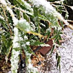 letitsnow desert bamboo californialove snowing pcwhite white