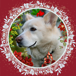 freetoedit holly hollyberries hollidays frame