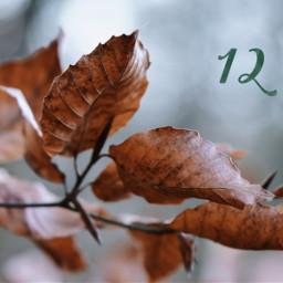 freetoedit leaves december simple