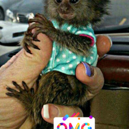 freetoedit omg iwantone toocute cute