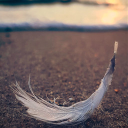 nature beachmood beachvibes lowangleview feather freetoedit