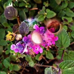 photography photographer flores flowerphotography naturephotography freetoedit