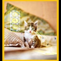 freetoedit cat kitty kitten petsandanimals