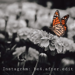 freetoedit flower flora butterfly nature