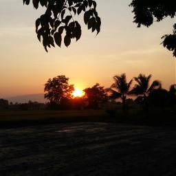 freetoedit mystyle photography sunset trees