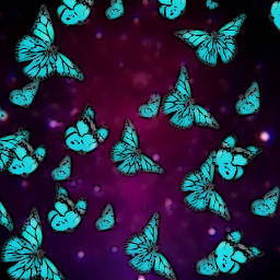 still butterflies overlay nature space freetoedit
