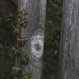 freetoedit fence wood ivy