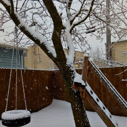 pcwhite white snow snowing tree