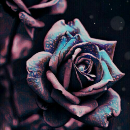 roses love beautiful magiceffect