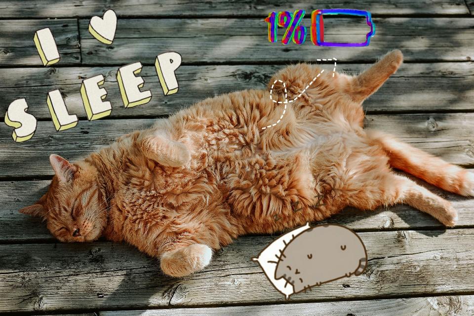 #ilovesleep →Lo dice el Gatito♥