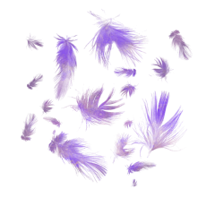 feather purple overlay effects freetoedit