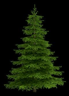 christmastree tree pine cedar christmas freetoedit