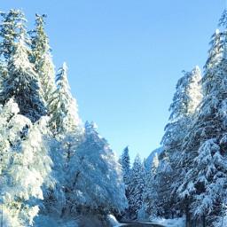 winterbliss snowscape winter beautiful freetoedit pcwhite white
