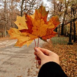 fall nature leaves december picsart