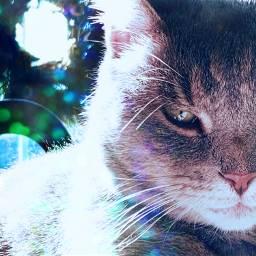interesting catslover christmasspirit christmaslights catsphotography