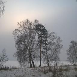 tree landscape winter myphoto naturephotography