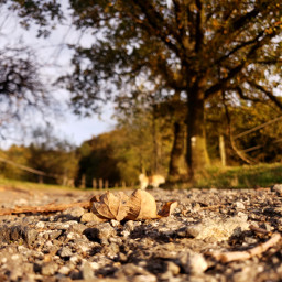 leaf autumn forest tree path