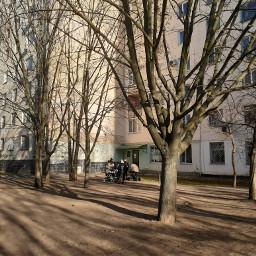winter wintertime trees wintertrees photo freetoedit