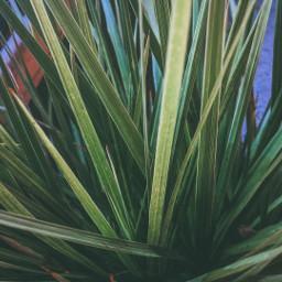 photo plants