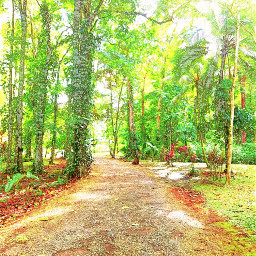road camino forest bosque tropical
