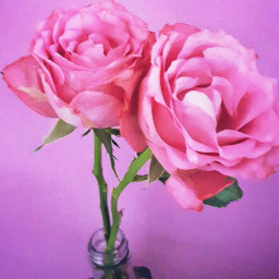 flower flowers pink green nature freetoedit
