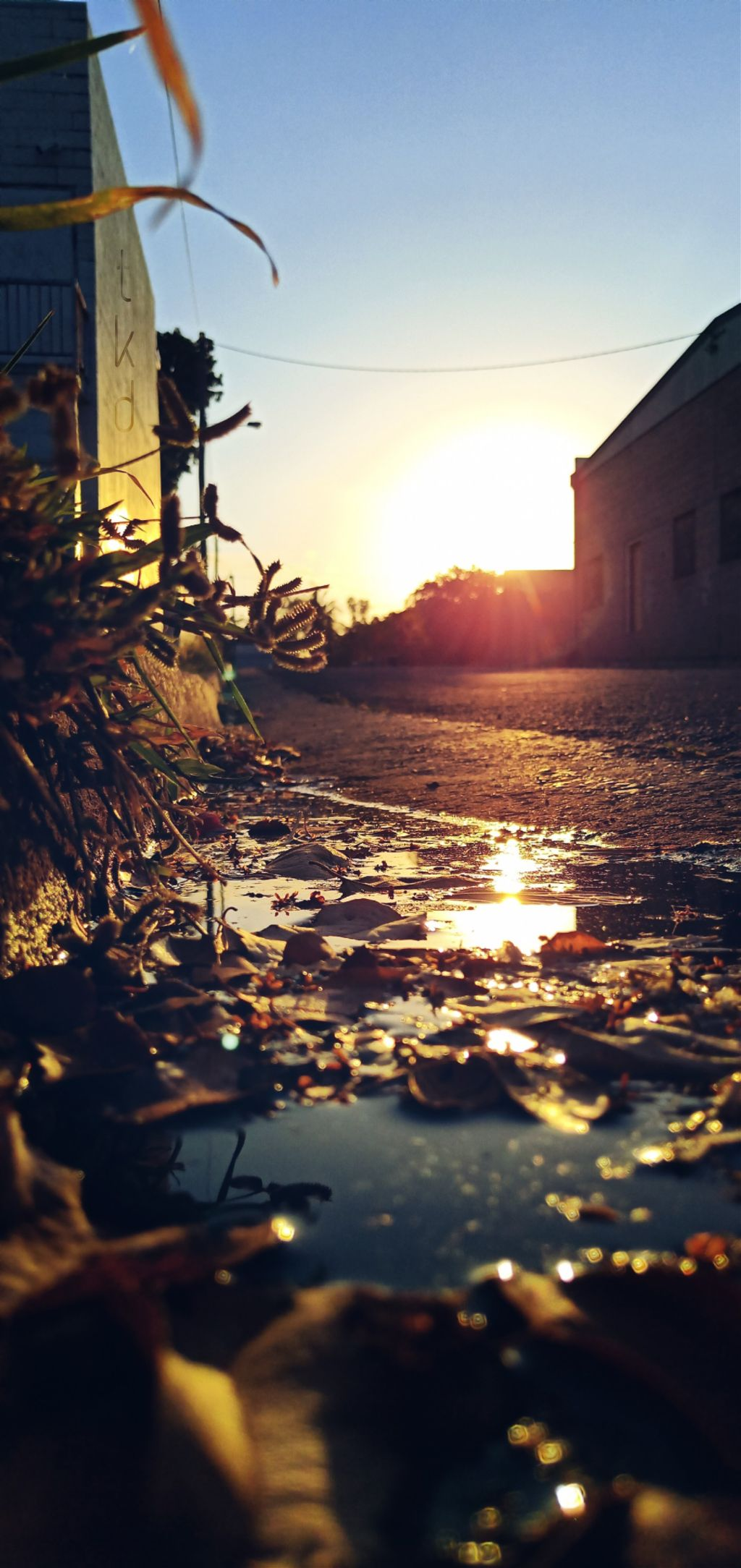 #sunrise #alleyway #lane #gutter #kerb #puddle #water #reflection #leaves #buildings #myphoto