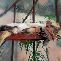 freetoedit cats cat kitty agata