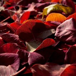 photography leaves closeup macro autumn