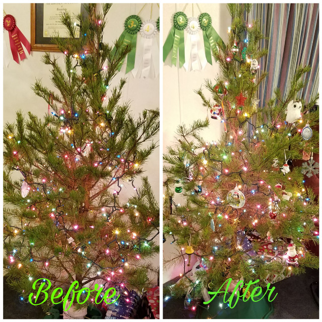 #christmastree #charliebrownchristmas #beforeafter