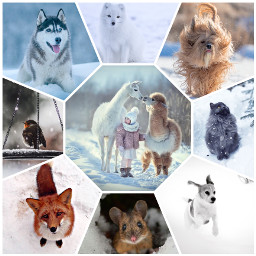 freetoedit winter winterfeels snow animal schnee ccwintermoodboard wintermoodboard