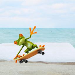 freetoedit frog fun froggy skate ircwindyportrait windyportrait