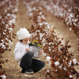 boy childhood cotton cottonfield picking