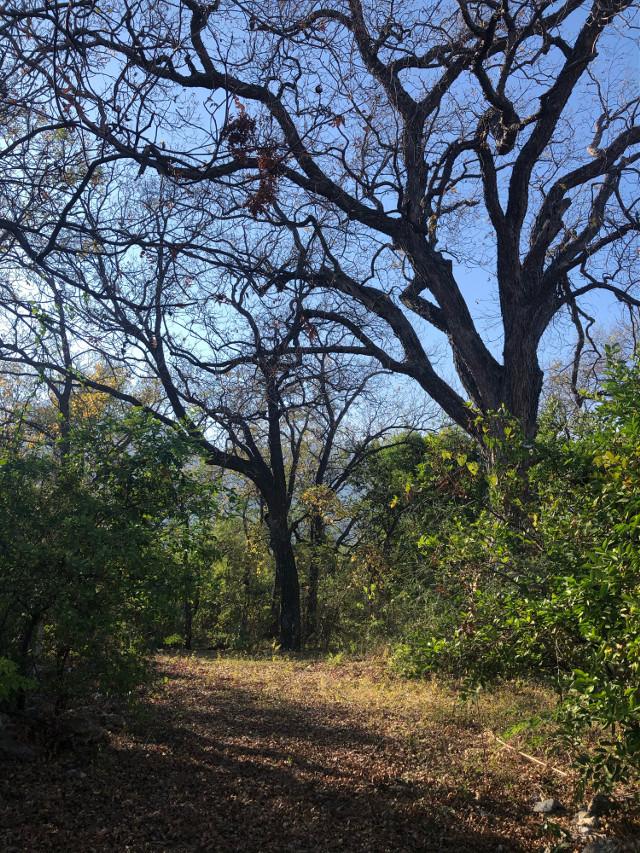 #paisaje #mexico #landscape #nature #trees #naturaleza #arboles