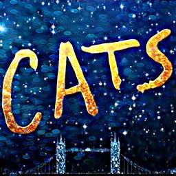 freetoedit cats text nightsky cityscape