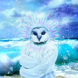 freetoedit myoriginalwork originalart conceptart owl ircinthesnow
