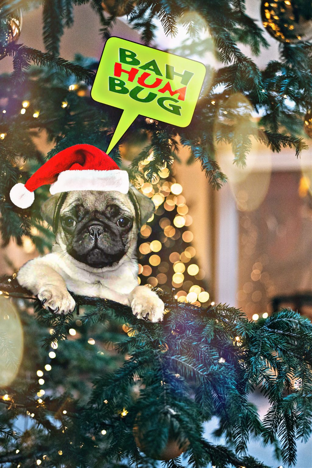 #freetoedit #pug #pupoy #dog #petsandanimals #tree #christmas #callout #text #quotesandsayings #bahumbug