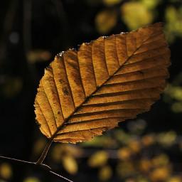 fall autumnleaves autumn freetoedit single