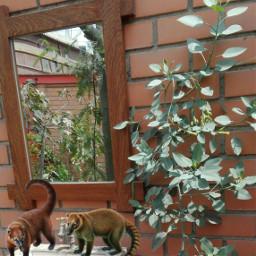 freetoedit coati mirror garden wood