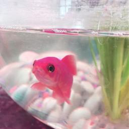 pinkfish glichty vaporwave vaporwaveart vaporwavecrew