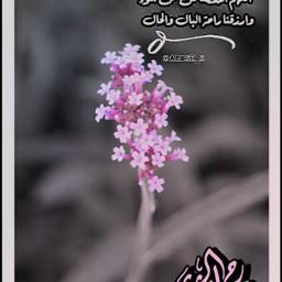 mydesign goodmorning flowers freetoedit