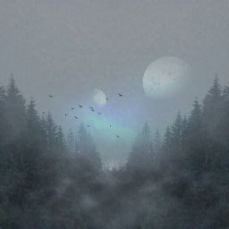 freetoedit mystical forest magical backgrounds