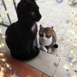 freetoedit catslover