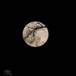 freetoedit fullmoon canonphotography nightphotography nature